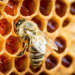 cera de abeja en hexágonos
