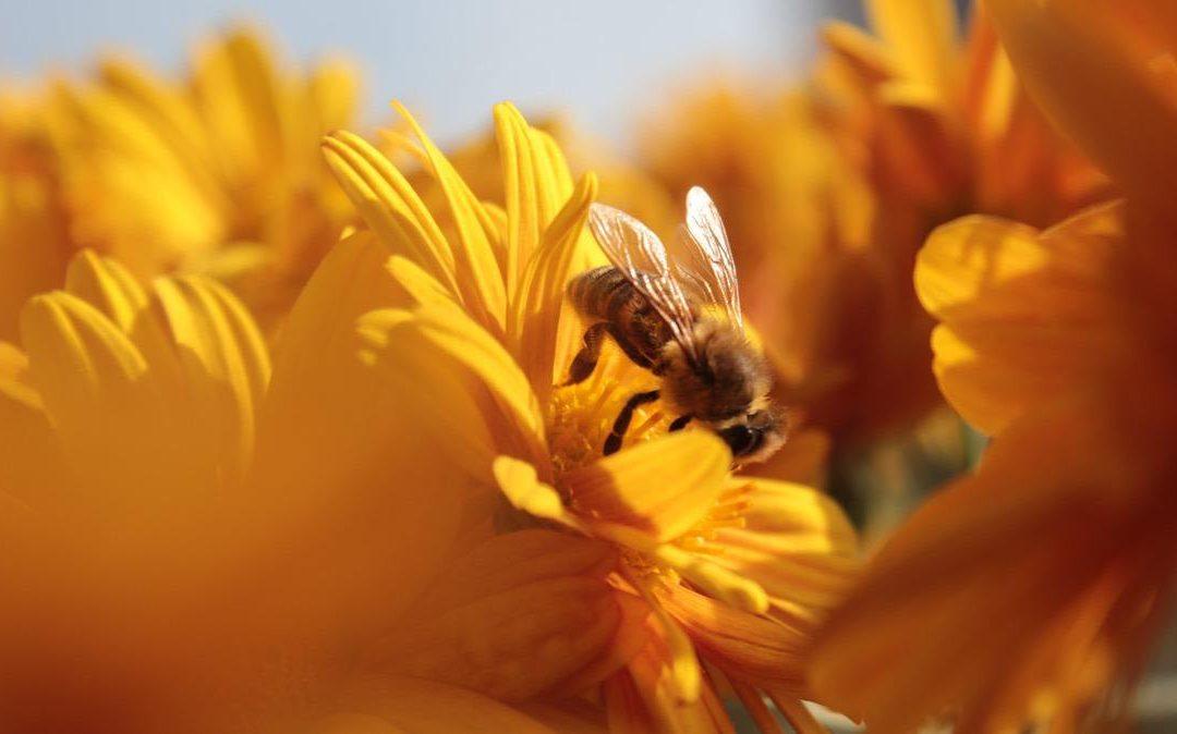 Las principales amenazas para las abejas