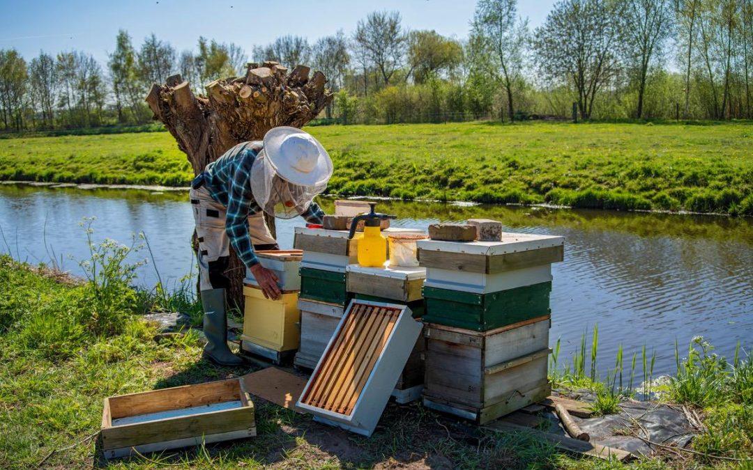 8 formas diferentes de proteger a las abejas