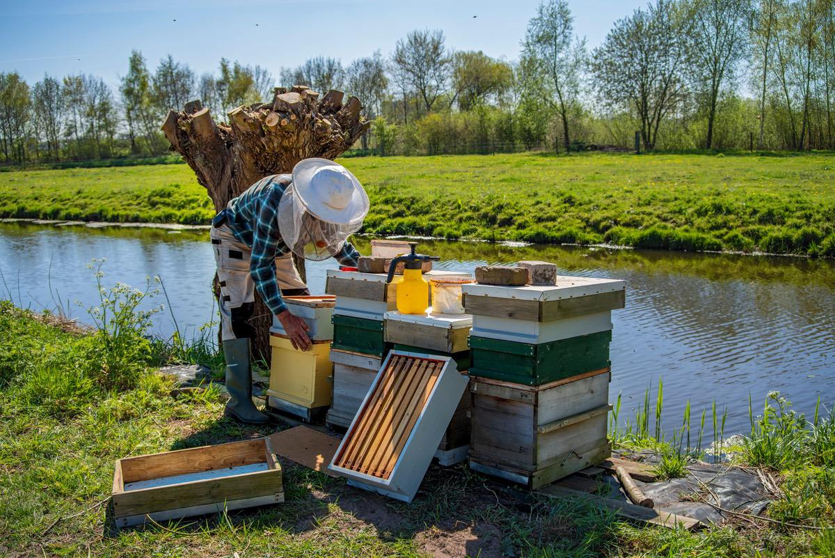 apicultor con panales junto al agua